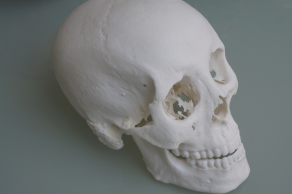 This is 3D print of an MRI scan of a mummy from the Birmingham Museum Trust, circa 320AD.